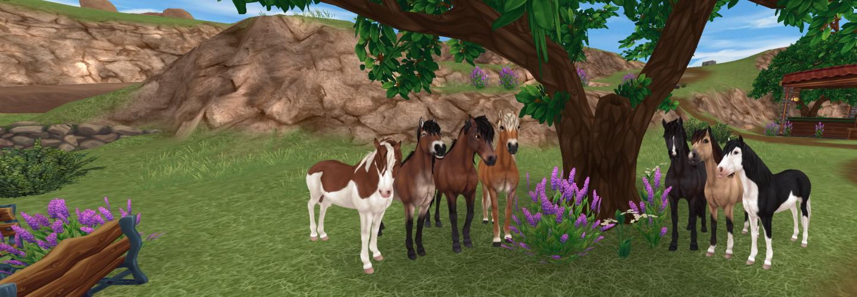 Die Gotland Ponys haben Einzug bei uns in der Pferde Kartei erhalten!